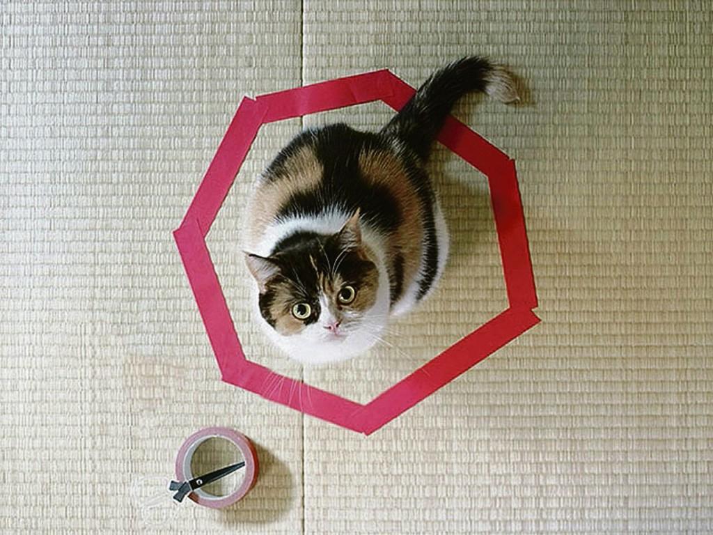 Zoeken katten in cirkelvormen geborgenheid? Online wordt gespeculeerd.